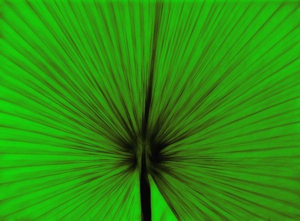 Under a -Palm Leaf by wobblything