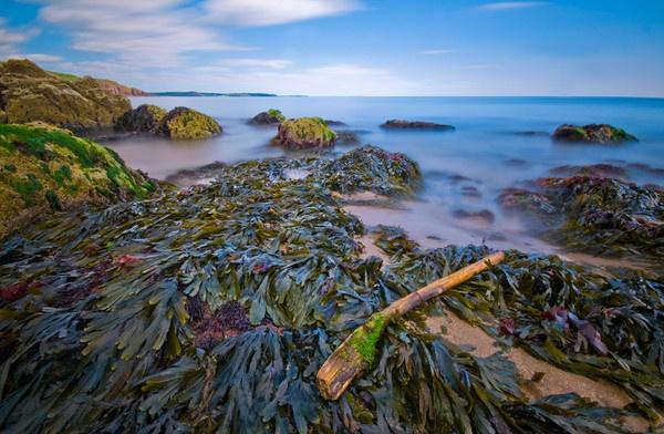 Low Tide by Macromania