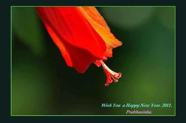 Hibiscus & Gerbera by prabhusinha