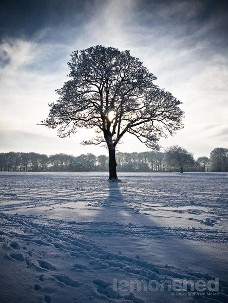 Winter Cast by lemonnelly