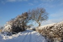 A Country Lane in the Snow