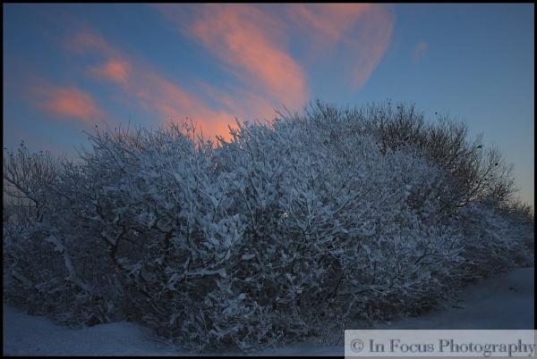 Snowy Tree by In-Focus-Imaging