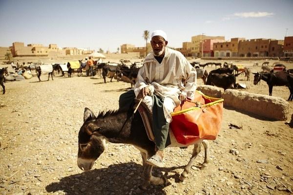 Donkey market by tomaszchrulski