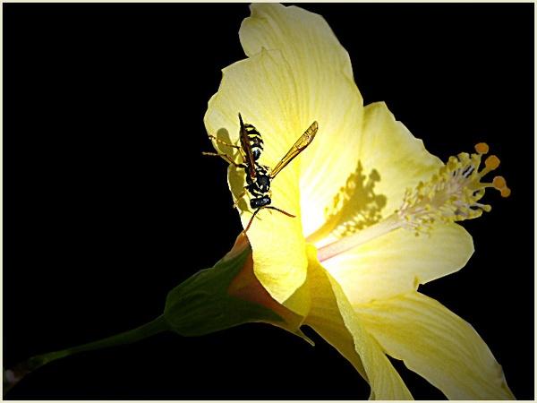 Wasp by csopi