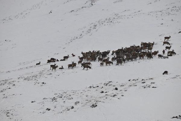 Deer by trevmsklly