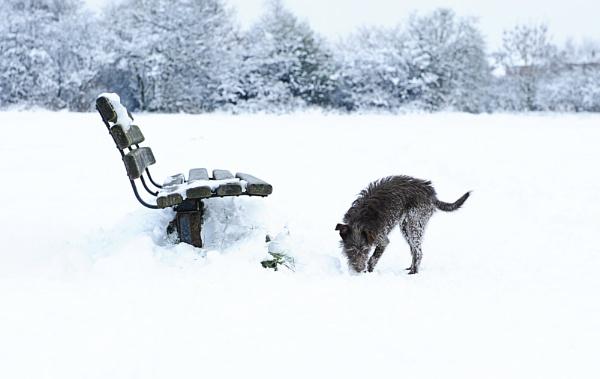 Roxy in snow by Ania Pankiewicz