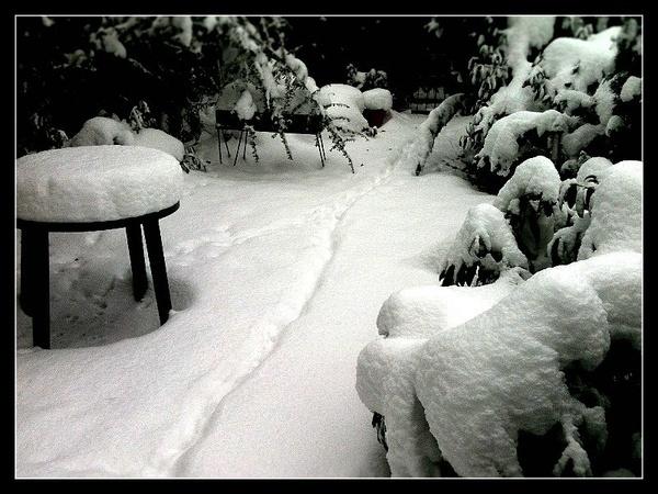 2010-12-26 my garden by nellabella