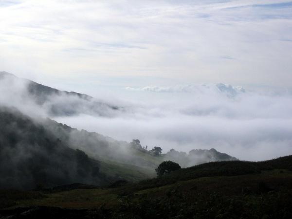 Misty Morning by BillPaskin