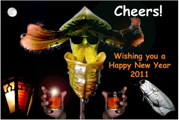 Happy New Year by Nikola