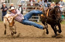 Steer Wrestling VI