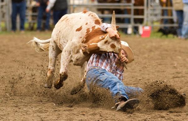 Steer Wrestling VII by steve_evans
