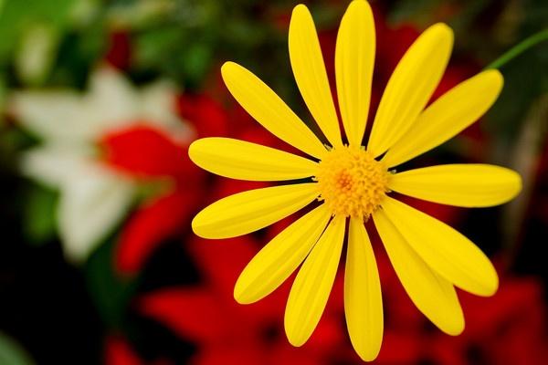 Flower Burst by ShotfromaCanon