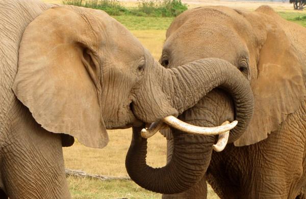 Elephants by Steve3671