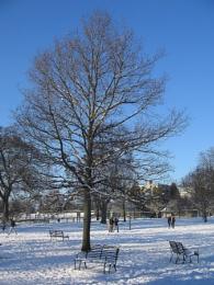 Pittville Park II