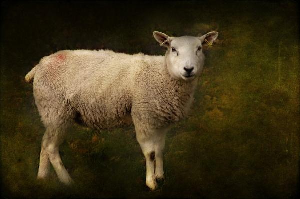 Ewe turn if ewe want to - I like my earings! by Suehh