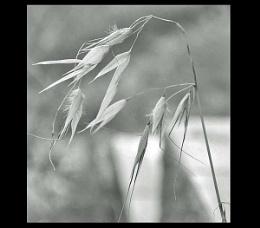 Just Grass.....