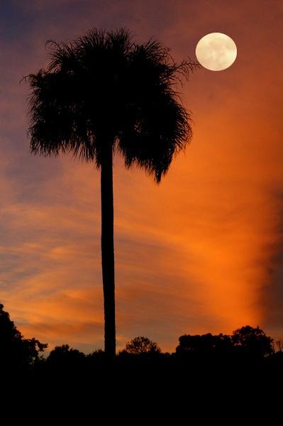 Florida Winter Moon by wsteffey