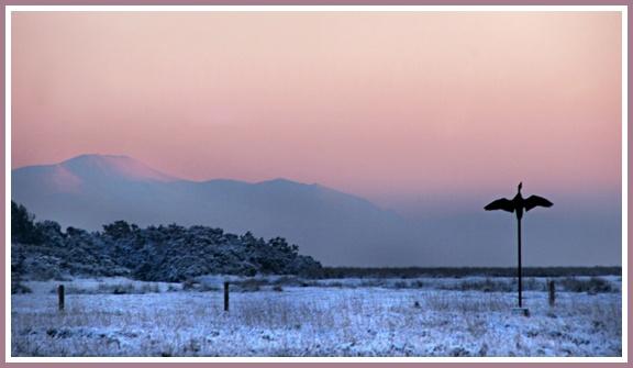 Solway Goose by aliciabeesley