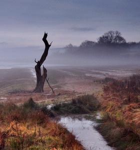 Lone tree in the mist by Gavin_Duxbury