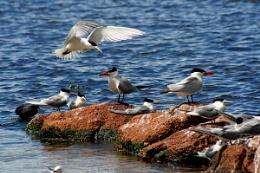Denmark Inlet Western Australia