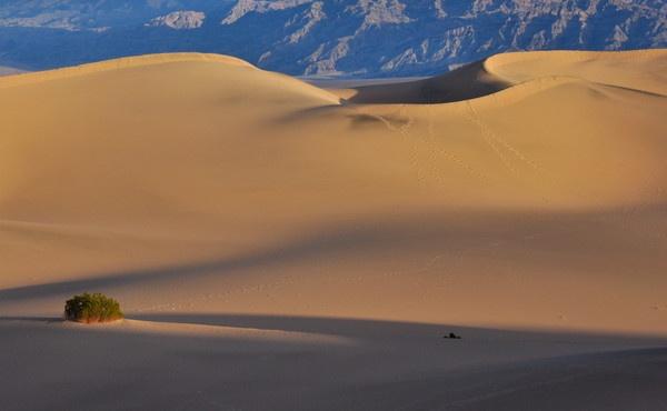 Mesquite Sand dunes by thevamaranr