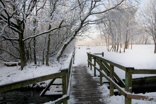 bridge to beauty by redpuma