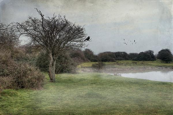 melancholy by TrevW