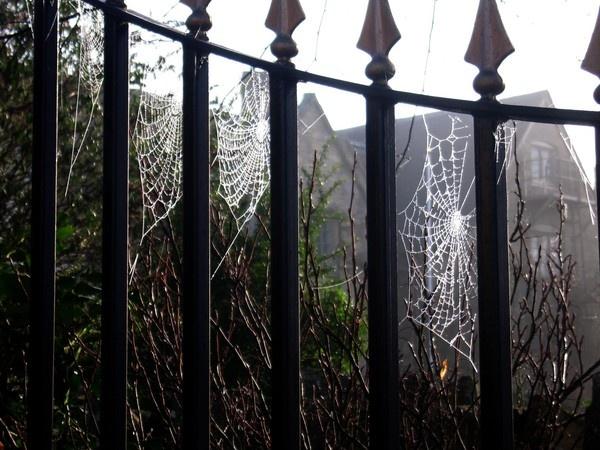 Morning Dew by BillPaskin