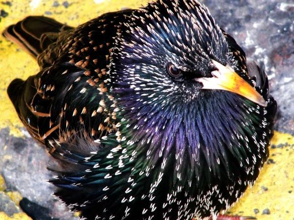 Friendly Bird by BillPaskin