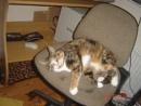 Office Kitty