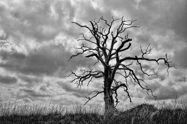 Barren Tree by Bigtoe