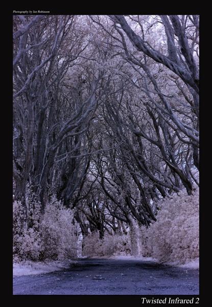 Twisted wood by ianrobinson