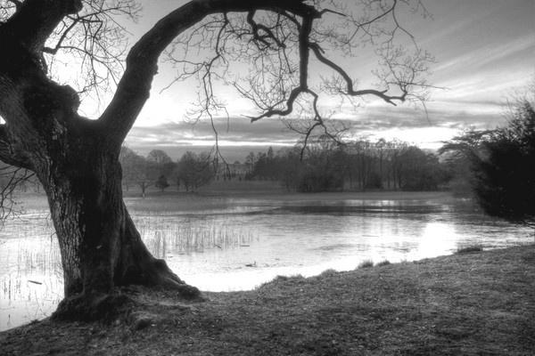 Warped Tree by Beladd
