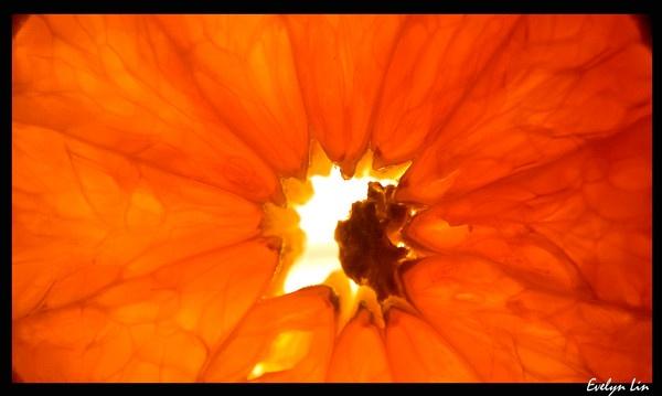 Orange by Shark_Teeth