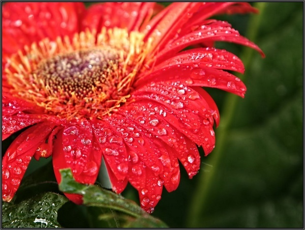 Flower by Schaune