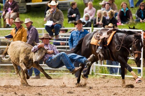 Steer Wrestling VIII by steve_evans