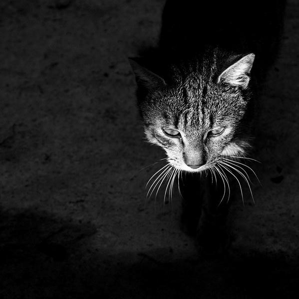 tomcat by IgorKo