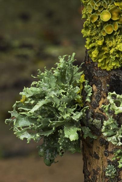 Lichen by dabbler100