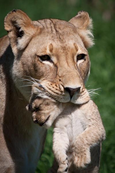 Mom & cub by cside