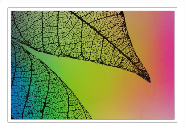 Polarisation...... by ejtumman