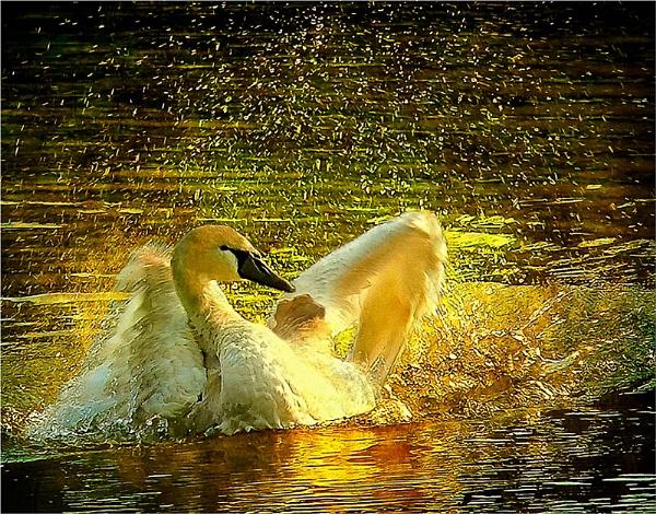 On Golden Pond by bricurtis