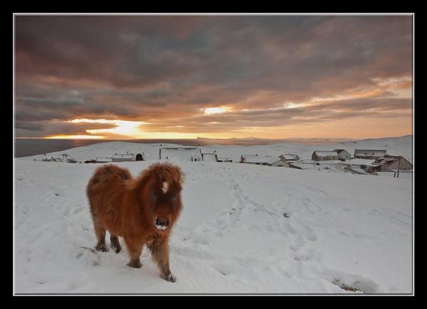 lone shetland pony by ireid7