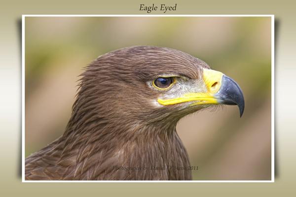 Eagle Eyed by danob