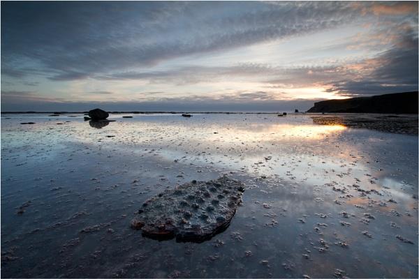 Saltwick Croc by ripleysalien
