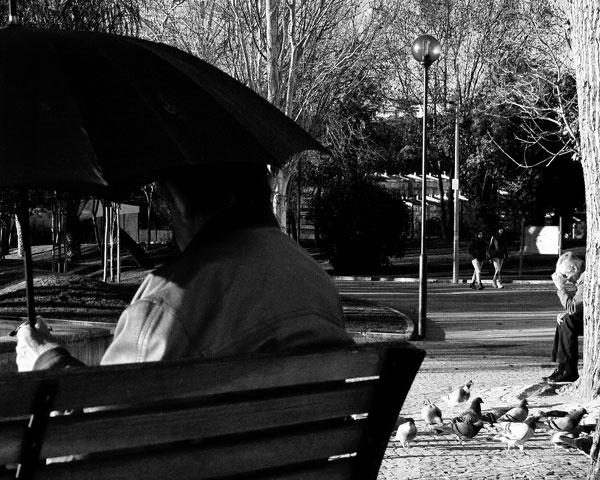 An umbrella, a tree by qosmio