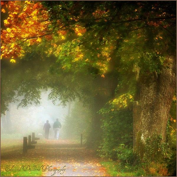 A MISTY MORNING WALK. by EDWARDDULLARD