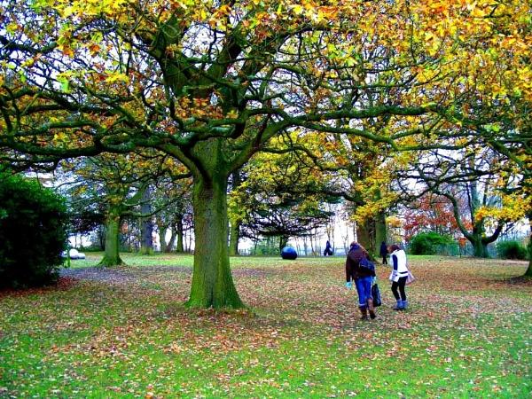 Magic Tree. by miss_v