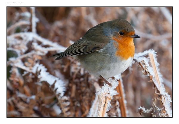 Friendly Robin by Weirdfish695