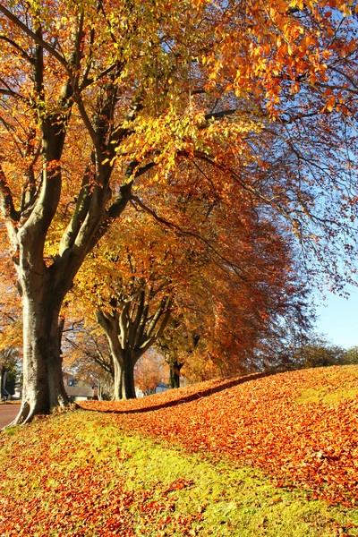 Autumn by rach_h
