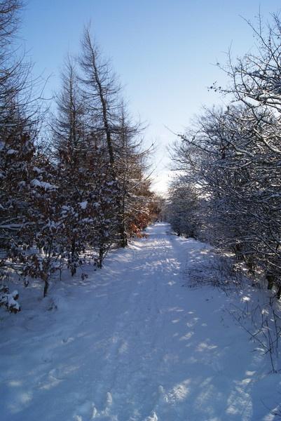 Snowy Trail by bigwulliemc